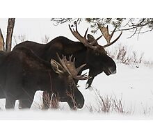 Moose Bros. #2 Photographic Print