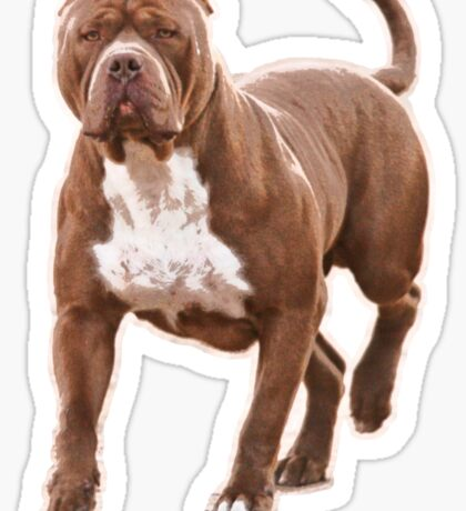 Pit bull brown 2 Sticker