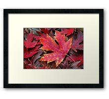 Autumn Maple Leaf on Forest Floor Framed Print