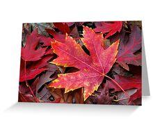 Autumn Maple Leaf on Forest Floor Greeting Card