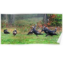 Wild Turkeys Feeding Along The Forest Poster