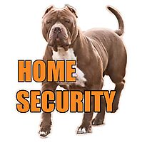 Home security pit bull Photographic Print