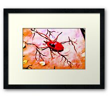 Red insect.  Framed Print