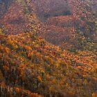 Great Smoky Autumn by Chaney Swiney