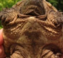 Give Them A Brake - Turtles Sticker