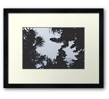 Snowy Colorado Pine Trees  Framed Print