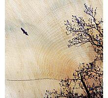 Woodcut Photographic Print