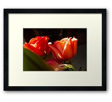 TWIN CORAL ROSES Framed Print