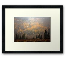 Aspens,Evergreens and snow storm Framed Print
