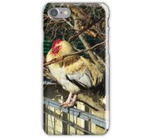 White And Fawn Fluffy Rooster Sleeping On A Fence iPhone Case/Skin