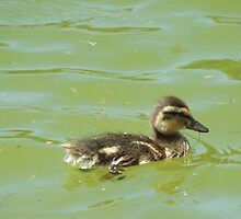 One Little Duckling by lornakay