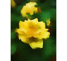 A Golden Rose Photographic Print