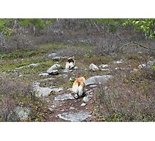 Happy Trails, Corgi Style Photographic Print
