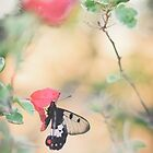 BUTTERFLY BLISS by Sally Werner