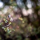 BUTTERFLY TRIO by Sally Werner