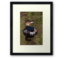 Grebe on Reflective Water Framed Print