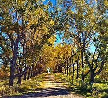 Golden Drive  by Judy Grant