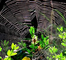 Caught in a web by MarianBendeth