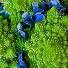 Romanesco by Barbara  Brown