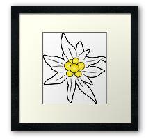 Edelweiss flower Framed Print