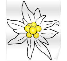 Edelweiss flower Poster
