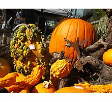 Knobby Pumpkins Photographic Print