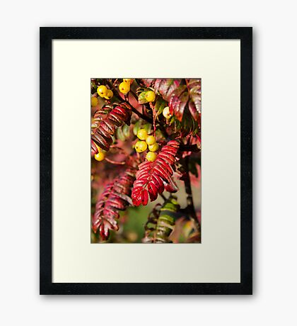 Autumn Berries and Leaves Framed Print