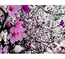Lost in Blossoms Photographic Print