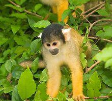 Yellow Monkeys by MichaelJP