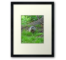 Chuckster Framed Print