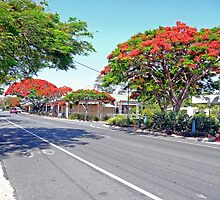 Poincianas, Victoria Point, Qld. Australia by Margaret  Hyde