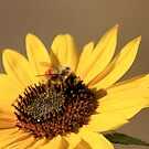 Bee and Sunflower by Lori Peters