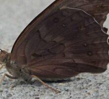 Mr. Moth Sticker