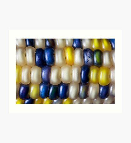Flint Corn Color Art Print