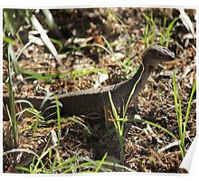 Baby monitor lizard Poster