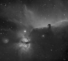 The Horsehead Nebula in Orion by Russell Cockman
