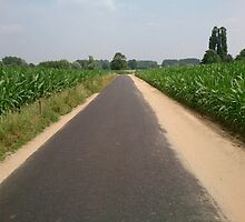 Road throught the corn fields by Nico-Invincible