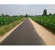 Road throught the corn fields Photographic Print