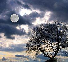 Full Moon Risin' by Barbny