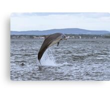 Dolphin jumping for joy Canvas Print