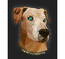 Pit Bulls - Not A Stereotype  Photographic Print