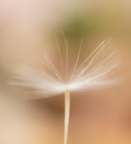 dandelion fluff channeling its inner ballerina Sticker
