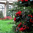 Begonia Christmas Tree in the Conservatory by AngieDavies