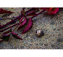 Velvet Leaves & Coloured Stones Photographic Print