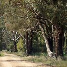Country Road Grenfell NSW by julie anne  grattan