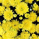 Bursting in Yellow by debidabble