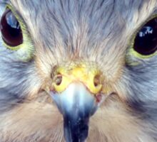 Kestrel - Close Up of face Sticker