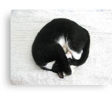 Cat - Black & White Moggie Canvas Print
