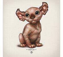 Cataclysm - Elf Kitten - Classic Canvas Photographic Print
