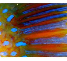Parrot Fish up close! Photographic Print
